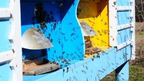 Les abeilles volent à la ruche banque de vidéos