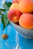 Les abricots entiers organiques mûrs frais dans la cuvette en céramique sur la table en bois bleue de jardin, noyau, vert part Photographie stock libre de droits