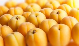 Les abricots groupent sur le fond blanc Photographie stock libre de droits