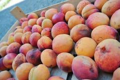 Les abricots oranges organiques mûrs ont emballé dans une caisse en bois image stock