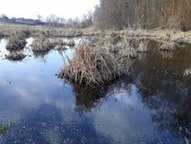Les accumulations de l'herbe sèche en rivière marécageuse image stock