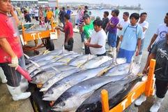Les acheteurs vérifient la qualité du thon au port maritime Photographie stock