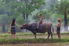 Les agriculteurs asiatiques emploient le buffle pour labourer photographie stock libre de droits