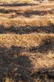 Les agriculteurs brûlent la paille dans les domaines après récolte Image libre de droits