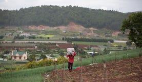 Les agriculteurs de Dalat ont moissonné des oignons image libre de droits