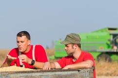 Les agriculteurs examinent le soja dans la remorque après récolte image libre de droits