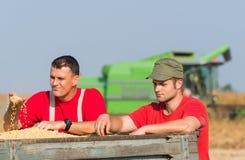 Les agriculteurs examinent le soja dans la remorque après récolte images stock