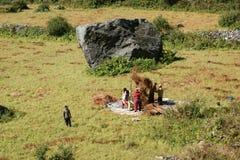 Les agriculteurs fanent la prairie de fauche Photo stock