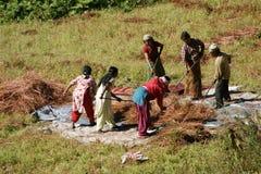 Les agriculteurs fanent la prairie de fauche Photographie stock libre de droits