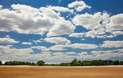Les agriculteurs jaunes mûrissent le champ de culture de grain Images stock