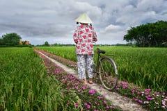 Les agriculteurs mène des bicyclettes pour aller l'extrémité de la route Images libres de droits