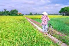 Les agriculteurs mène des bicyclettes pour aller l'extrémité de la route Image libre de droits