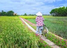 Les agriculteurs mène des bicyclettes pour aller l'extrémité de la route Image stock