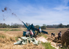 Les agriculteurs moissonnant le riz Photo libre de droits