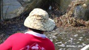 Les agriculteurs moissonnent des crevettes clips vidéos