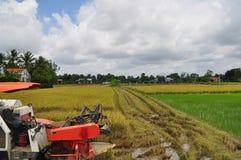 Les agriculteurs moissonnent le riz dans le domaine d'or au printemps, dans le Vietnam en septembre 2014 occidental Image libre de droits