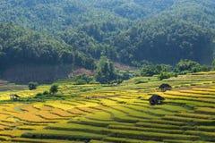 Les agriculteurs moissonnent leurs cultures brusquement pendant la saison i de récolte images libres de droits