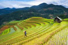 Les agriculteurs non identifiés réalisent le travail d'agriculture sur leurs champs le 13 juin 2015 en MU Cang Chai, Yen Bai, Vie Photographie stock