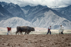 Les agriculteurs ont manuellement écarté l'engrais et labourer la terre Photographie stock