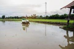Les agriculteurs plantent le riz Photo stock