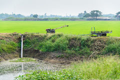 Les agriculteurs pompant l'eau au riz de jasmin met en place avec le vieux tracteur Image stock