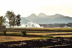 Les agriculteurs portent le riz moissonn? dans les villages dans Java images stock