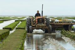 Les agriculteurs travaillent à la ferme d'huître à marée basse en Grandcamp-Maisy, France Photo stock
