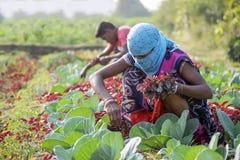 Les agriculteurs travaillent Photos stock