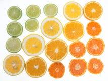 Les agrumes ont arrangé dans un gradient tonal de couleur sur le backgro blanc Image stock