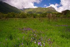 Les Agudes peack view from field of flowers in spring. Royalty Free Stock Photo