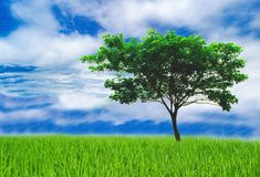 Les aides d'arbre réduisent le réchauffement global Photo libre de droits