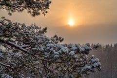 Les aiguilles dans la neige Image libre de droits