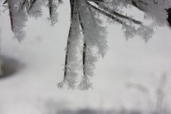 Les aiguilles ont mangé dans la neige flocons de neige collants Photos libres de droits