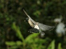 Les ailes photographie stock libre de droits