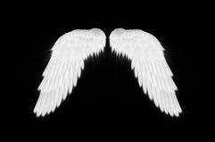 Les ailes de blanc Image libre de droits