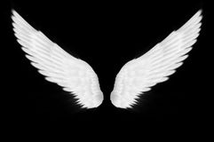Les ailes de blanc Images stock