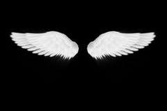 Les ailes de blanc Photographie stock libre de droits