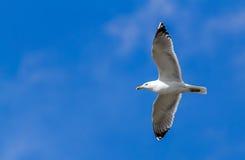 Les ailes de la liberté Photographie stock libre de droits