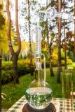 Les alchimistes de forêt Photo libre de droits