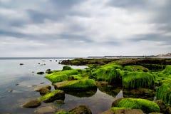 Les algues ont couvert des roches chez Lyme REGIS Photos stock