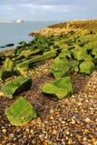 Les algues vertes ont couvert des roches Images libres de droits