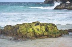 Les algues vertes ont couvert la roche sur une plage dans Aruba Photo stock