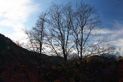 Les Alpes de la Bavière en Allemagne Image stock