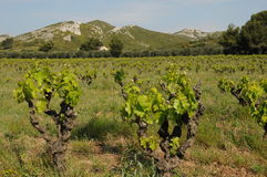 Les Alpilles in Provence Royalty Free Stock Photos