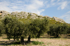 Les Alpilles in Provence Royalty Free Stock Image