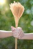 Les amants couplent tenir les mains et la fleur d'herbe avec le backgro de bokeh Image libre de droits