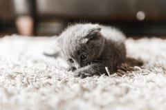 Les amants de chat matraquent photos stock