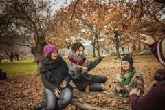 Les amis ayant l'amusement jetant part dans un parc Photographie stock libre de droits