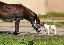 Les amis embrassent l'âne et le chien Photos libres de droits