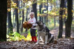 Les amis fille et chien jouent dans l'enfant d'amis de forêt d'automne et le jeu enroué sur l'air frais en bois extérieurs Photographie stock
